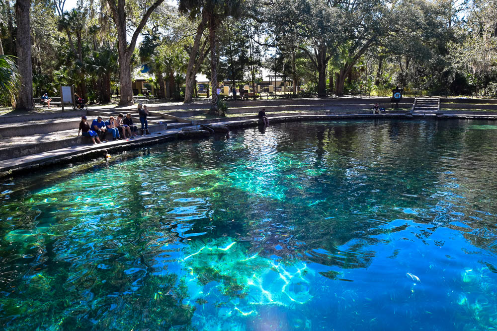 Juniper Springs offers superb swimming.