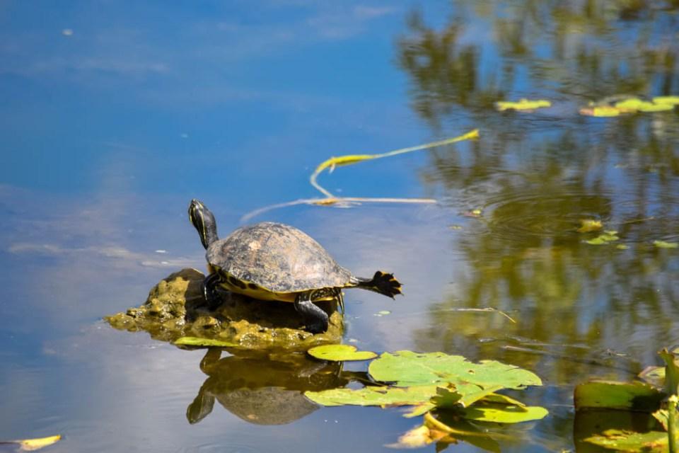 Turtle Stretch!
