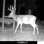 Moultrie A300 Flash Trail Camera Long Range Infrared with Illumi-Night Motion Sensor & 12.0 MP Resolution (MCG-13336) 2019-2 Pack