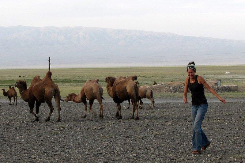 Camels in the Gobi!