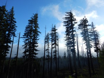The drive over Santiam Pass