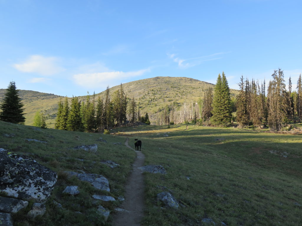 On the trail to Tiffany Mountain. Jake's very first backpacking adventure!