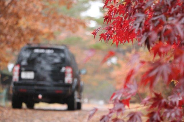 Land Rover, Discovery-4, Discovery, Jaguar Land Rover Mishima, Asagiri Highland, Autumn Leaves, ランドローバー, ディスカバリー, ディスカバリー4, ジャガー・ランドローバー三島, ランドローバー三島, 朝霧高原, 紅葉,