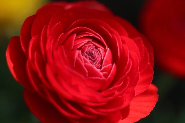 春の花, 花, フラワー, flower, spring, spring has come,