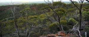 Mt Matilda Walk Trail
