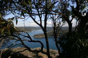 Bairne Track to Towlers Bay Lookout