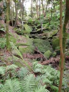 Ferndale Park Loop