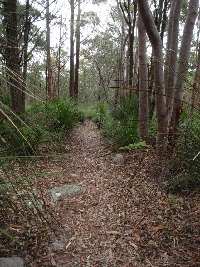Mouat Trail (Katandra to Rumbalara)
