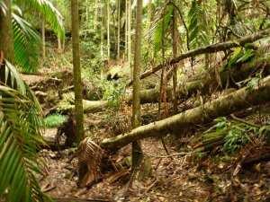 Muirs Rainforest Walk
