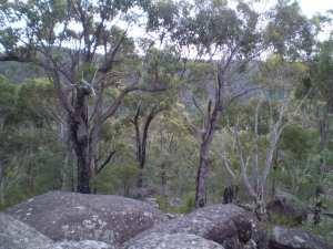 Nerang Viewpoint