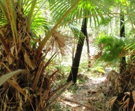 Palm Tree Circuit Track