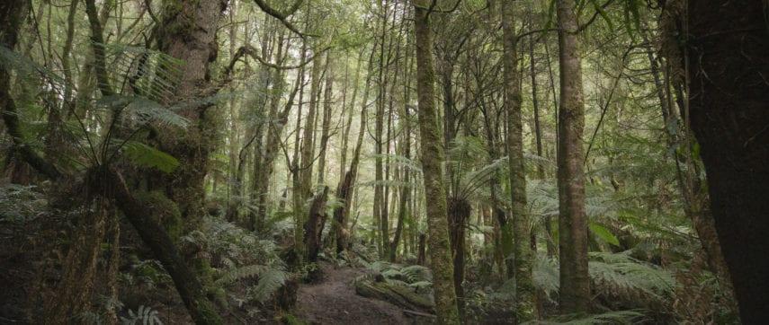 homeinvisagepublic_htmltrailhikingwp-contentuploads201703trail-hiking-ada-tree-hike-1.jpg
