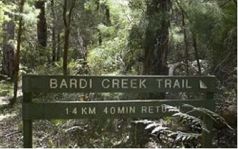 Bardi Creek Trail