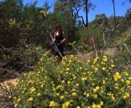 Blue Wren Ramble Trail