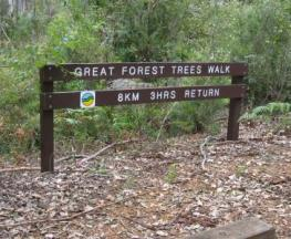 Great Forest Trees Walk