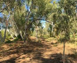 Larrgari Trail