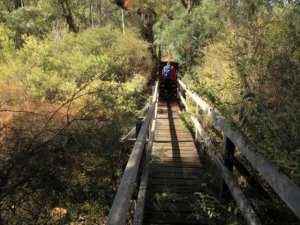 Mundlimup Timber Trails