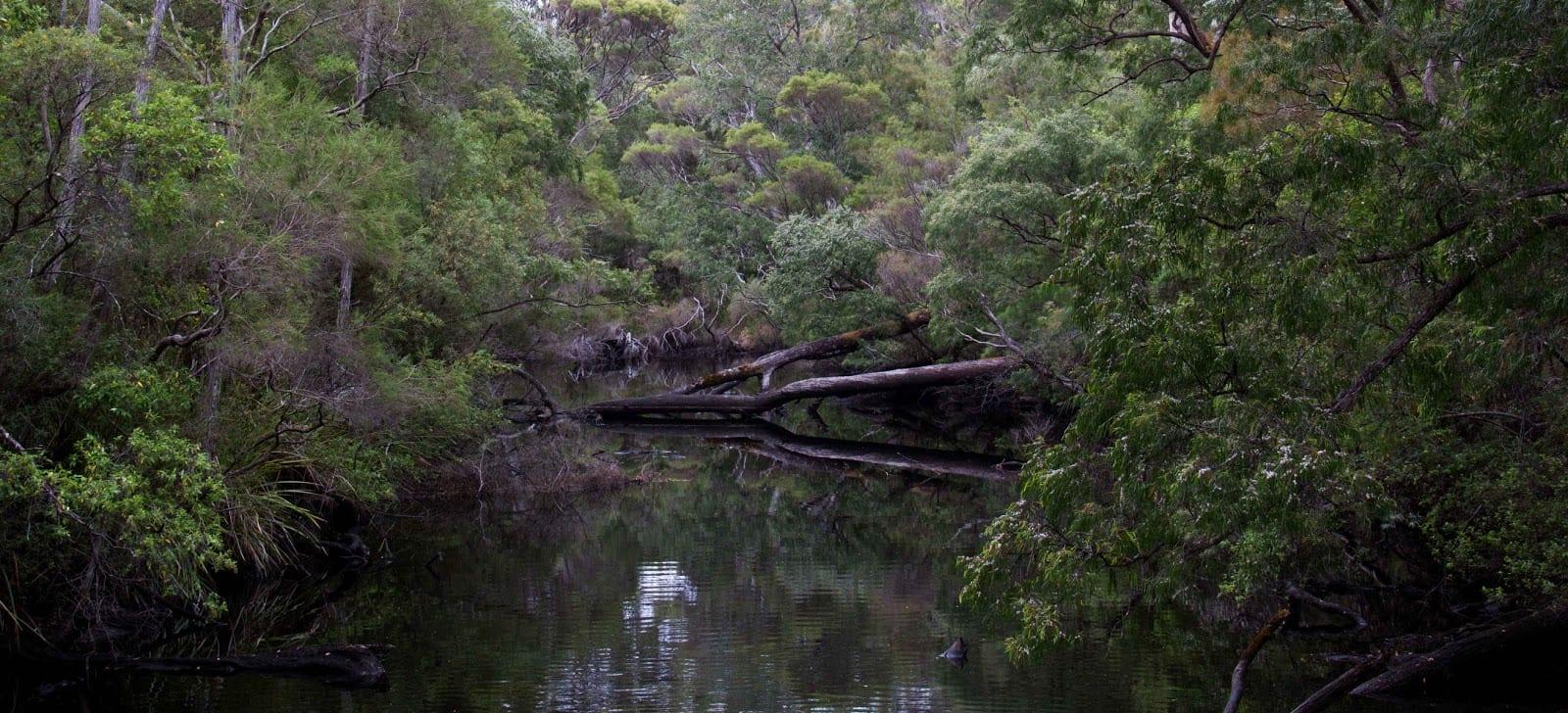 Deep River Loop Walk