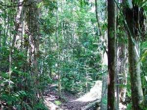 Kauri Creek Rainforest Walk