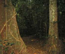 Malanda Falls Rainforest Walk