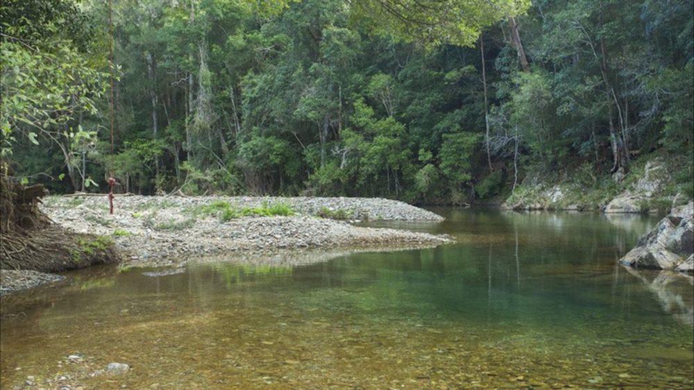Mount Allan Trail