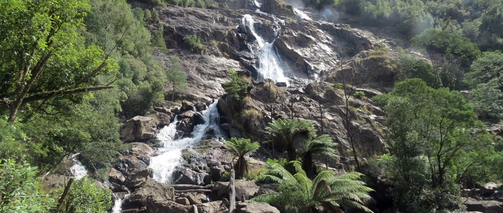 St Columba Falls Trail Hiking Australia