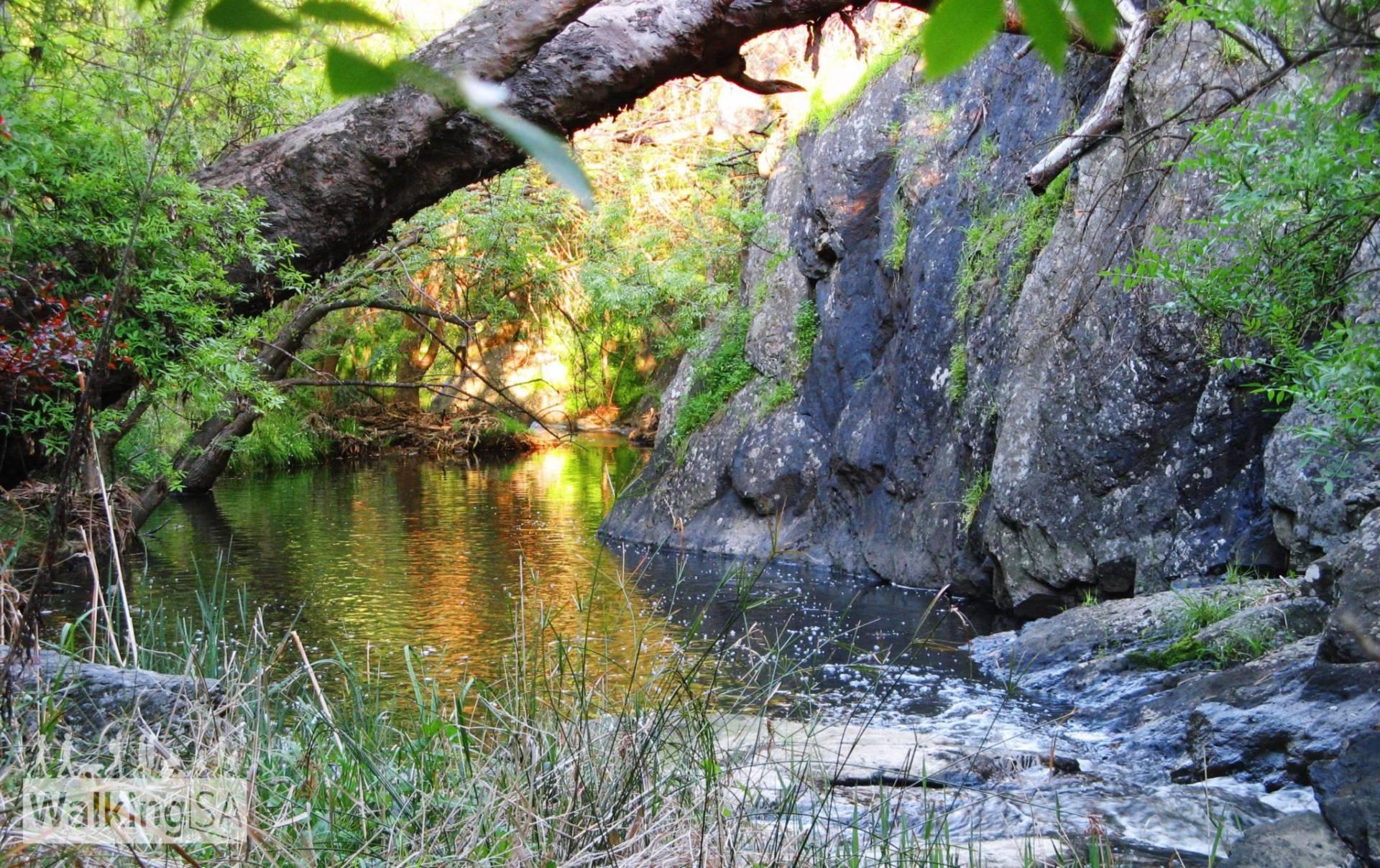 Sturt Gorge River Trail