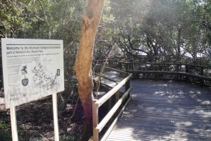 Wynnum North Mangrove Circuit