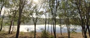 Cedar Block Circuit Ravensbourne National Park