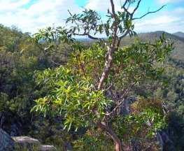 Koonin Lookout Crows Nest National Park