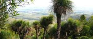 Cherry Plain to Burtons Well Bunya Mountains National Park