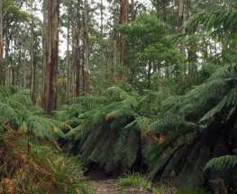 Tanglefoot Loop Trail Hiking Australia