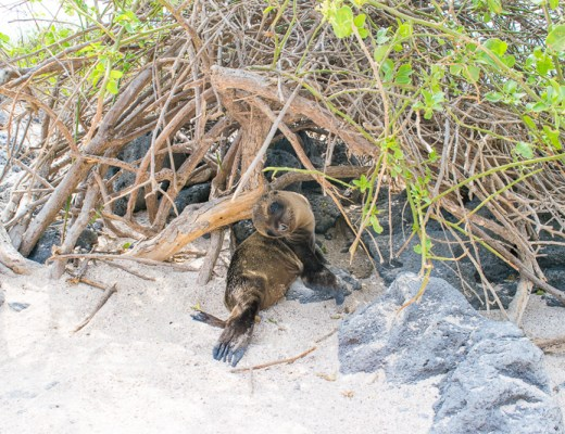 The Best and The Worst of My Galapagos Trip - Trailing Rachel