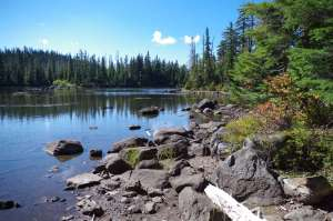 A small blue lake with rocks as the shoreline and surrounded by green coniferous trees.