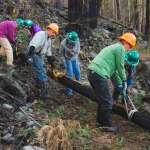 Six people wearing hard hats hold straps encircling a log to carry it across a trail against a backdrop of burned trees.