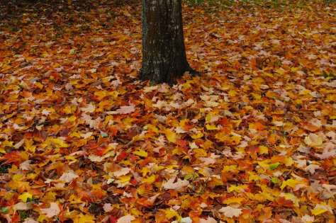 Red, yellow, and tan leaves cover the ground around the base of a tree.