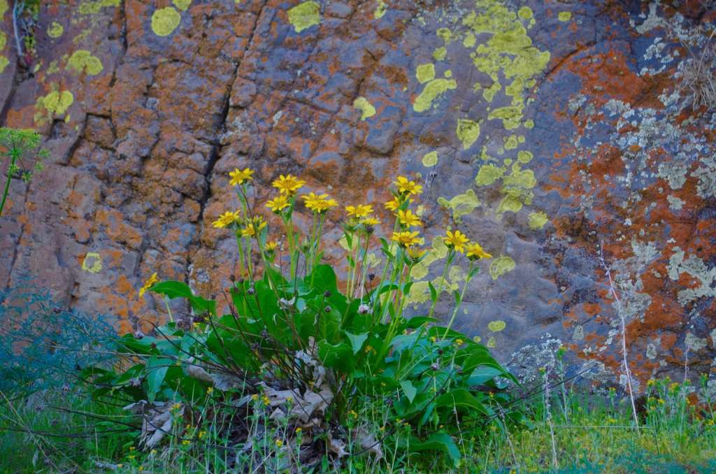 Yellow flowers against a colorful cliff