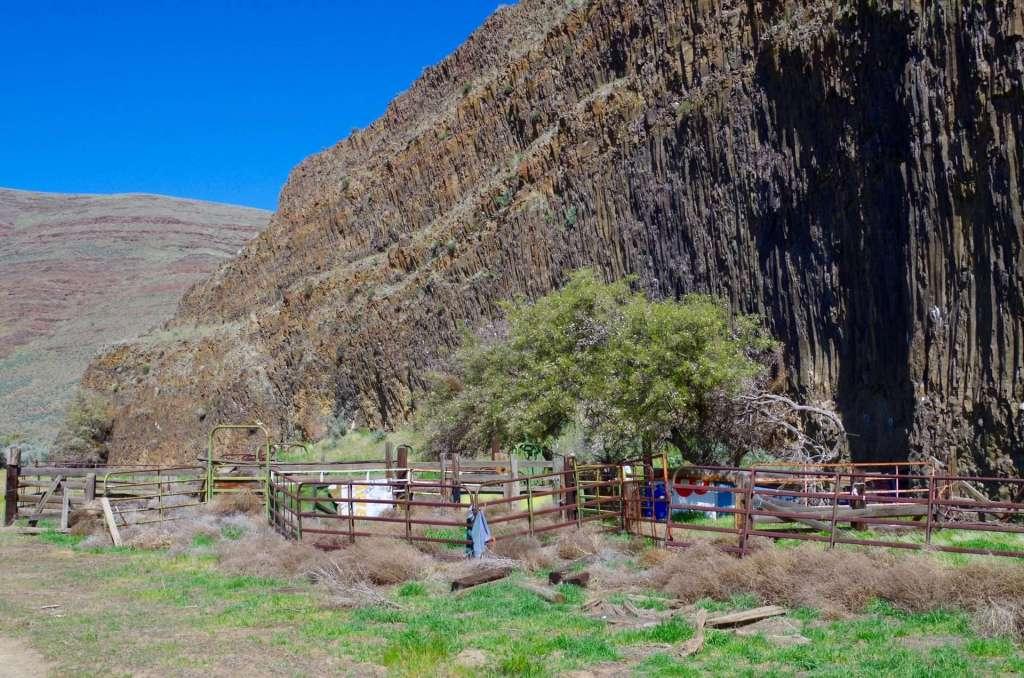 An old cattle corral below basalt cliffs