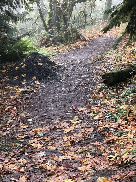 A wide, wet, muddy trail, partly covered with yellow and brown fall leaves.