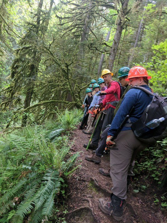 Trail workers in hard hats line up along a fern-lined trail listening to their crew leader explaining possible trail fixes.