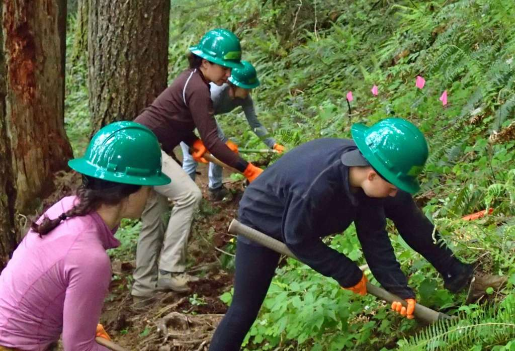 Four trail volunteers in green hard hats dig into a vegetated hillside to restore the original trail width.