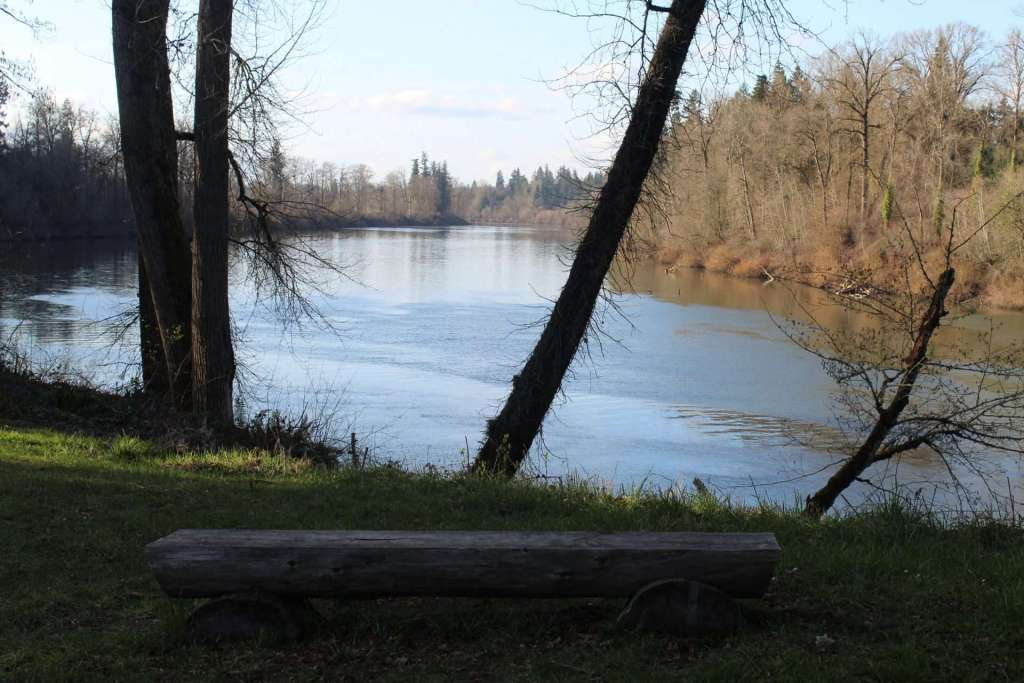 A bench faces out past the trunks of trees onto a peaceful stretch of river with leafless deciduous trees and conifers on the opposite bank.