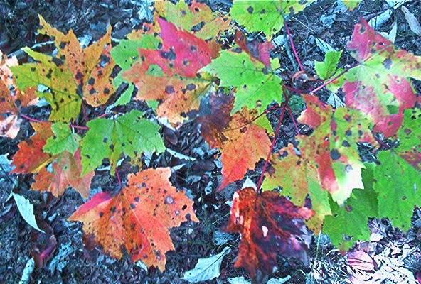 Fall Foliage Wallpaper Screensavers Appalachian Trail Desktop Backgrounds Screensavers