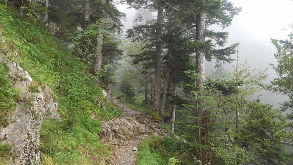Bosques en el Trail 2 Heaven