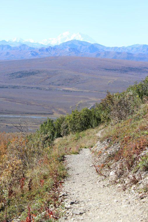 savage alpine trail denali