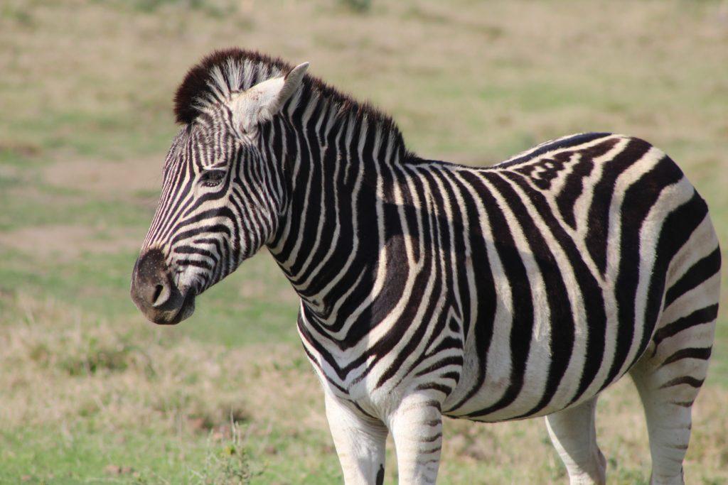 kariega game drive wildlife