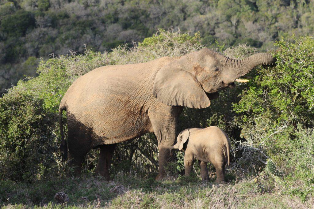 wildlife kariega safari