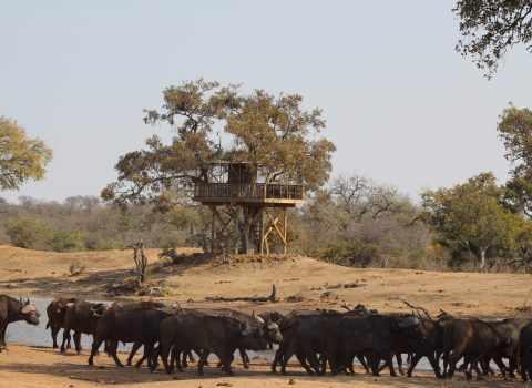 An Afternoon with the Giraffes in the Umlani Treehouse