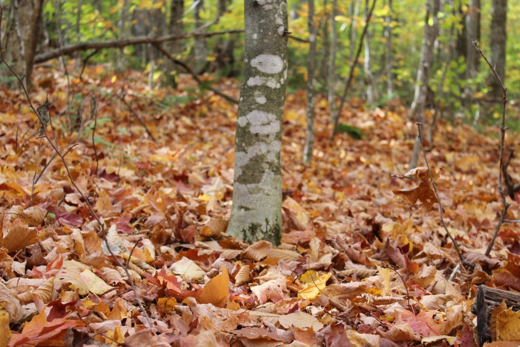 mt. Garfield fall hike