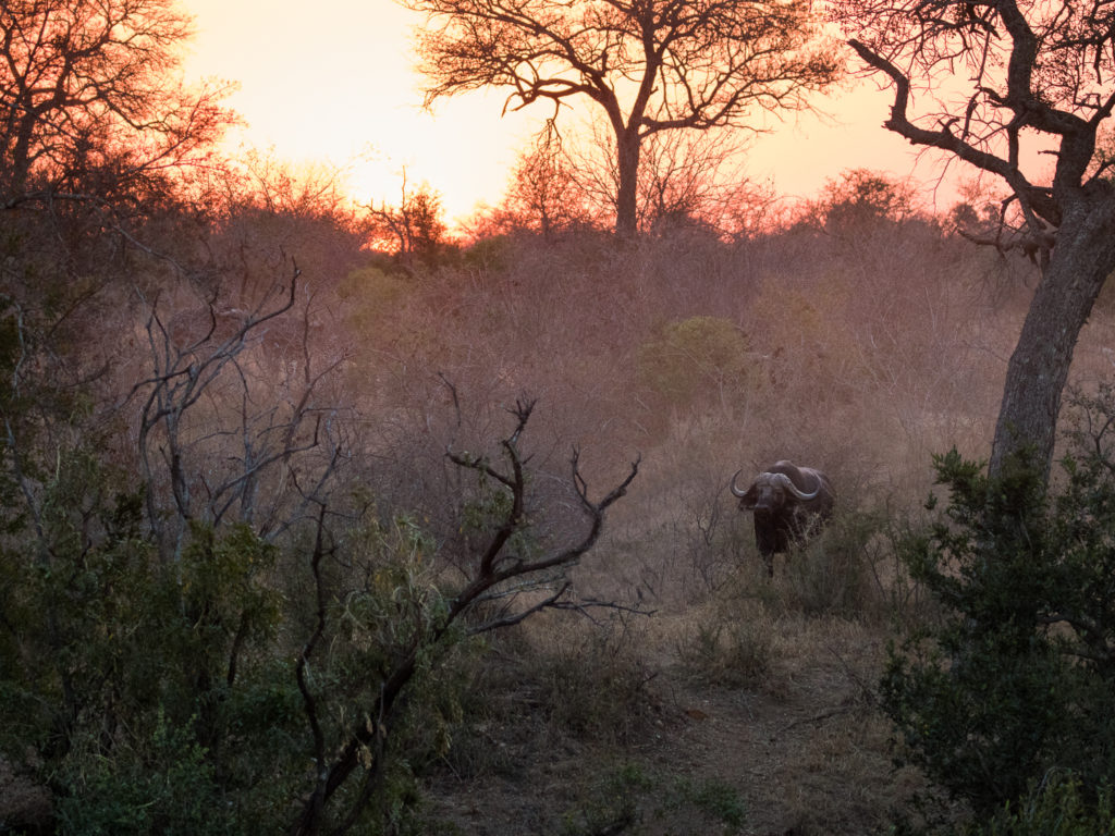 life as a safari guide